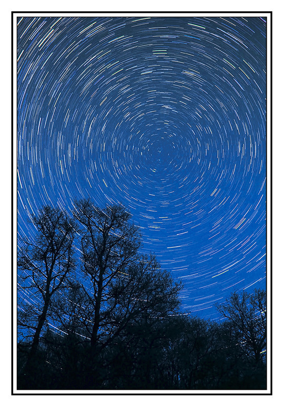 Startrail tree line - Clackmannan & Stirlingshire