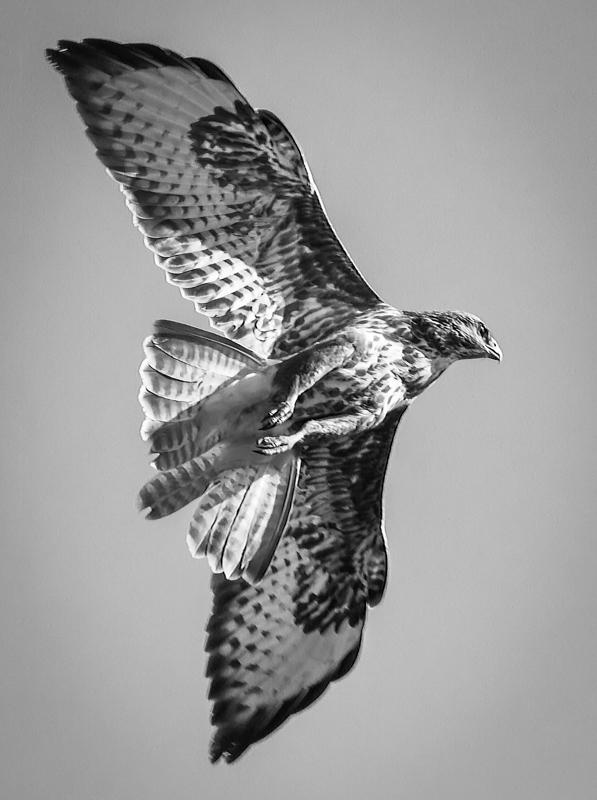 Buzzard flyby at Lydham - Media & Awards