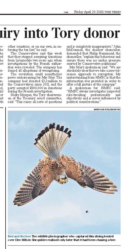 Kestrel hunting bumblebee The Times - Media & Awards