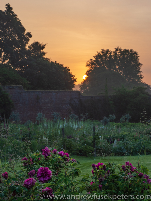 Sunrise in the flower garden with the roses - Olympus Landscape