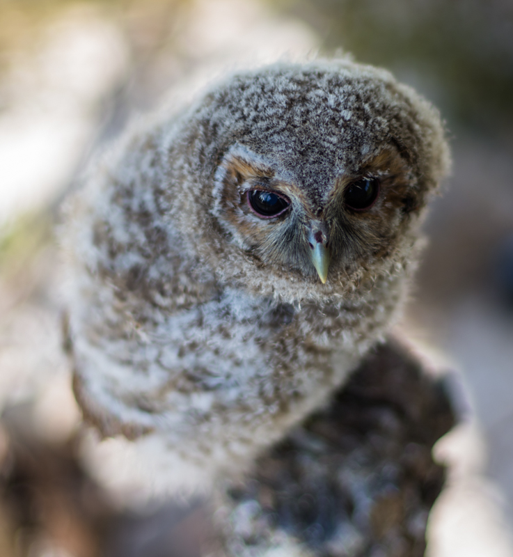 Owl perch - Cuan Wildlife Rescue