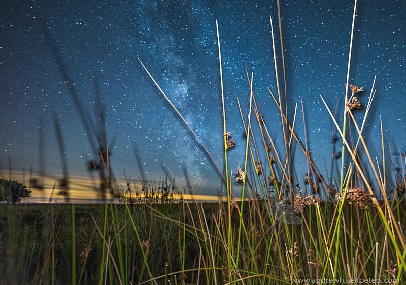Black darter roosting under the Milky Way Long Mynd - Upland, Shropshire's Long Mynd & Stiperstones