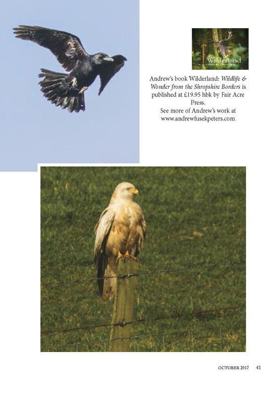 The Countryman, Wildlife in Focus, leucistic red kite_page_2 - Media & Awards