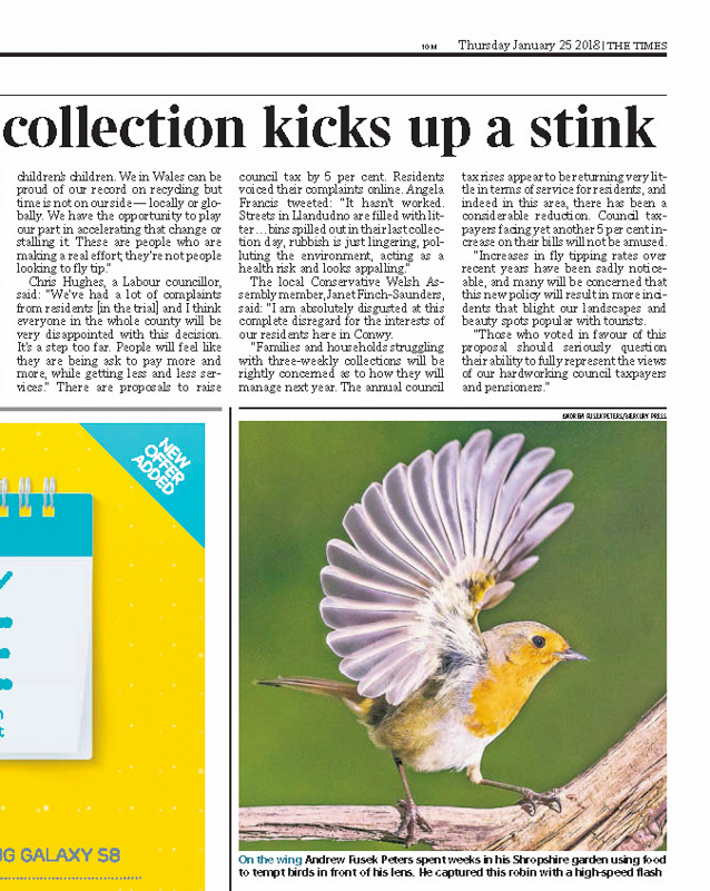 Robin with flared wing The Times - Media & Awards