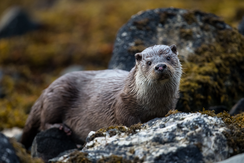 - Shetland and Scotland