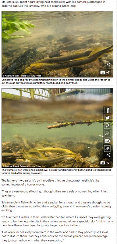 Brook Lamprey Mail Online 4 - Media & Awards