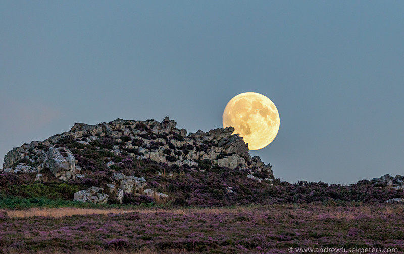 Full moon over the Devil's Chair with heather in bloom - Showcase