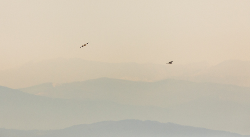 Ronda and the Straits of Gibraltar October 2017-19 - Spain and Vulture/Eagle Migration October 2017