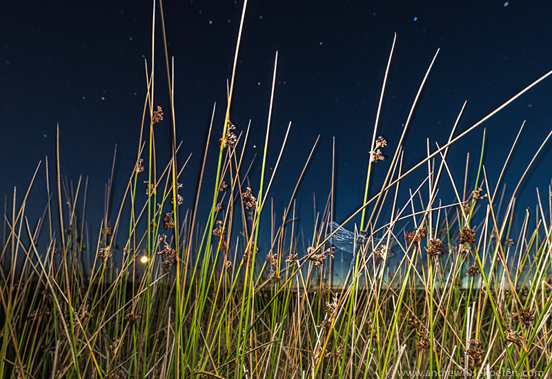 Black darter, reeds, moon and stars Long Mynd - Upland, Shropshire's Long Mynd & Stiperstones