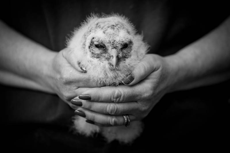 Rescue Tawny Owl, shortlisted Amateur Photographer of the Year - Media & Awards