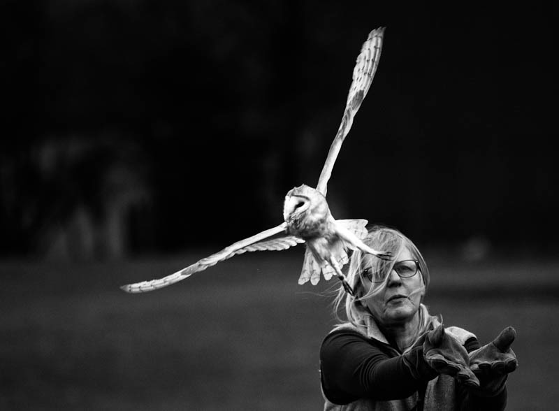 Barn owl being released into the wild - Media & Awards