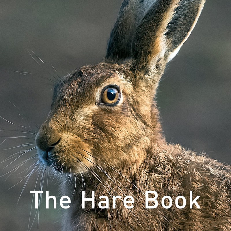 The Hare Book Cover Shot - Media & Awards