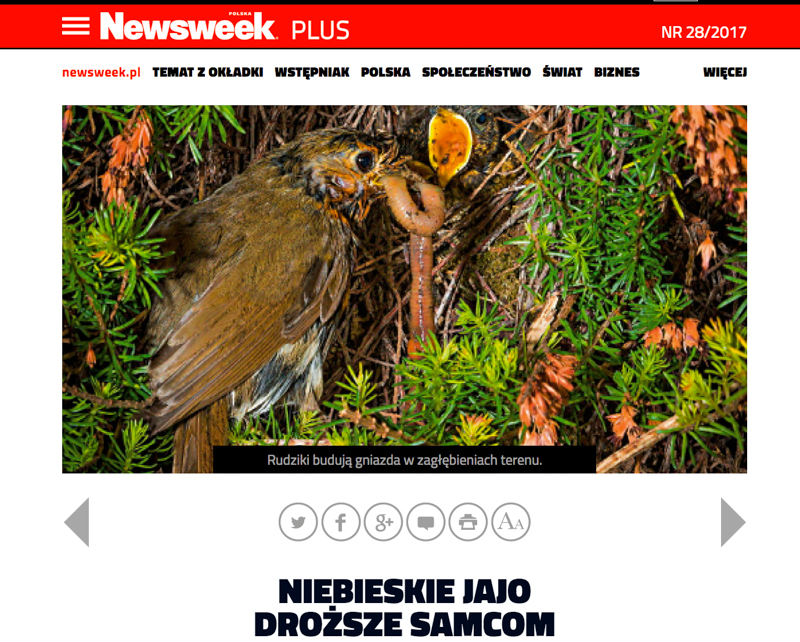 Polish Newsweek robin feeding chicks - Media & Awards