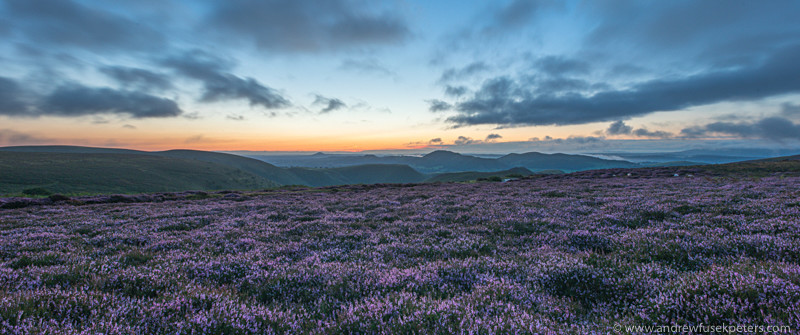 Heather in bloom before dawn, Long Mynd - Upland, Shropshire's Long Mynd & Stiperstones