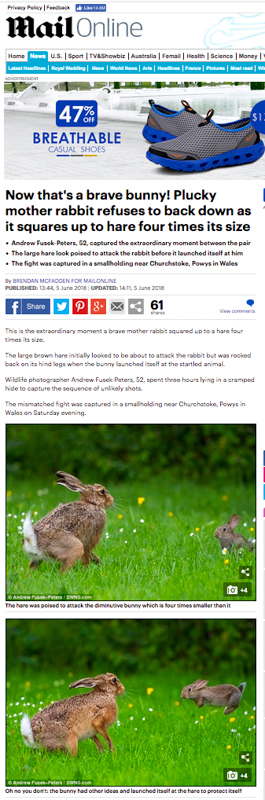 Screen Shot 2018-06-06 at 121840 - Olympus Wildlife