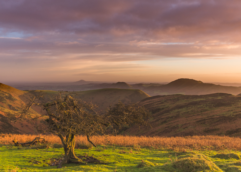 The Long Mynd in the early morning, view towards The Wrekin - Upland, Shropshire's Long Mynd & Stiperstones