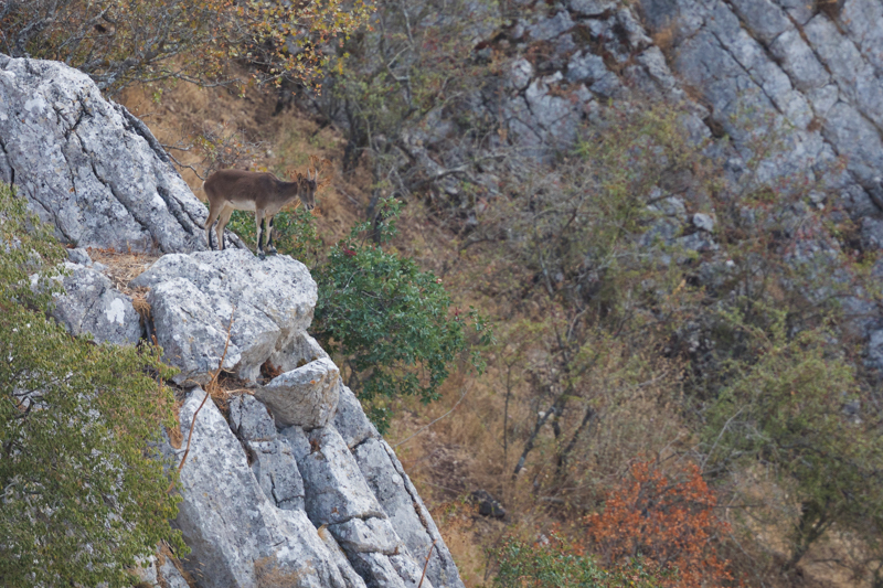 Ronda and the Straits of Gibraltar October 2017-12 - Spain and Vulture/Eagle Migration October 2017