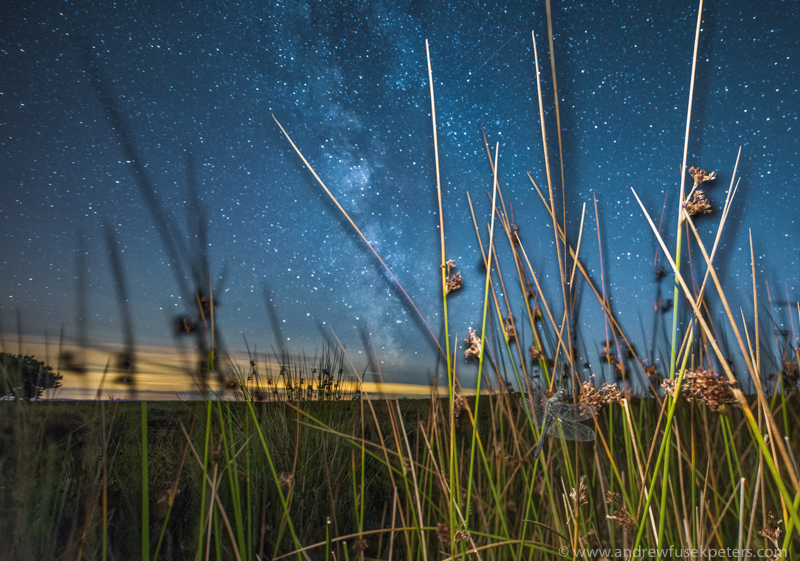 Black darter dragonfly roosting under Milky Way, Long Mynd - Media & Awards