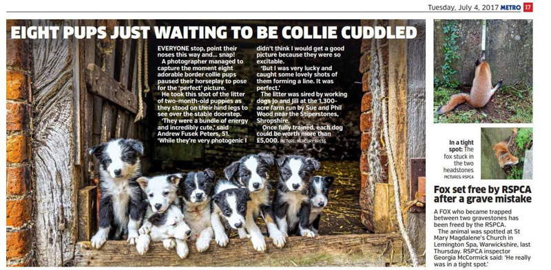 border collies in Metro - Media & Awards