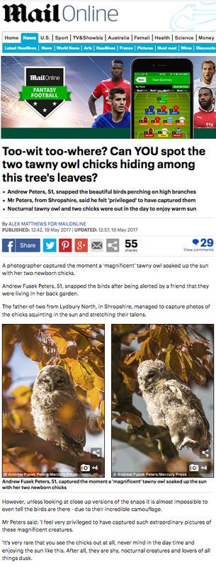 Daily Mail Online tawny chick story 1 - Media & Awards