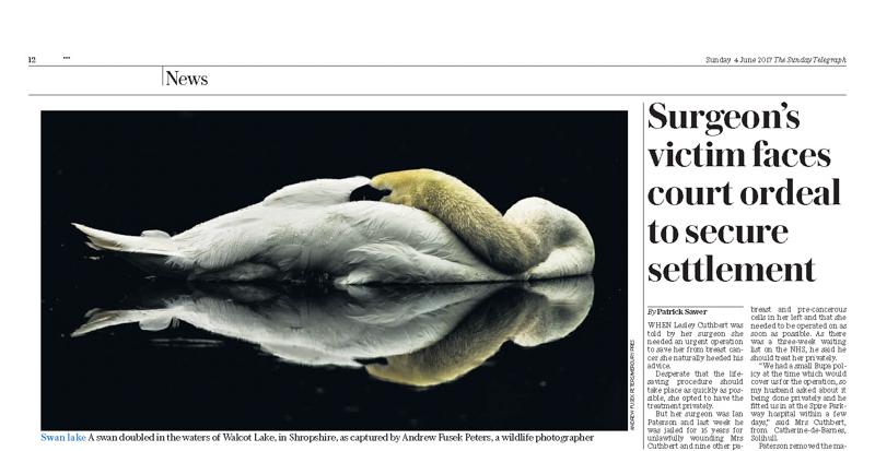 Swan reflected p12 Sunday Telegraph - Media & Awards