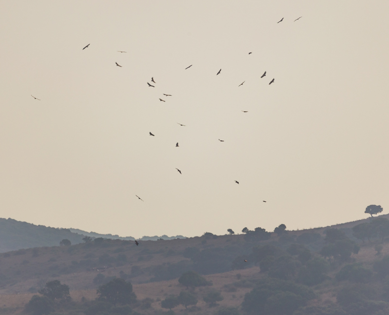 Ronda and the Straits of Gibraltar October 2017-39 - Spain and Vulture/Eagle Migration October 2017