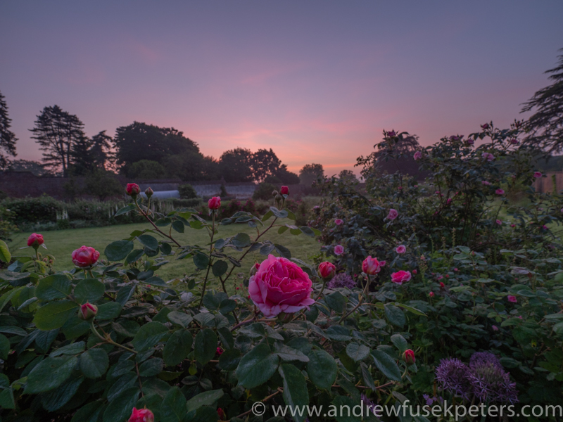 the roses and the rising light - Olympus Landscape