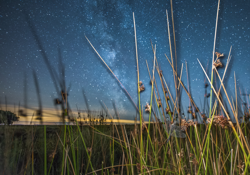 Black darter dragonfly and the Milky Way - Wide-angle Wildlife
