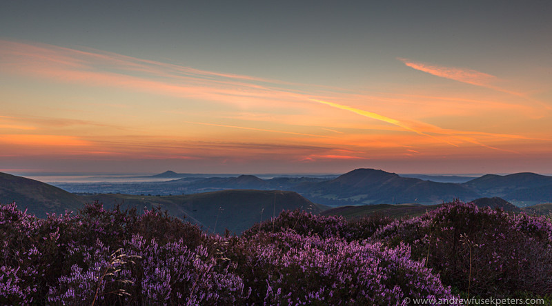 Dawn over the Long Mynd, the heather in bloom - Showcase