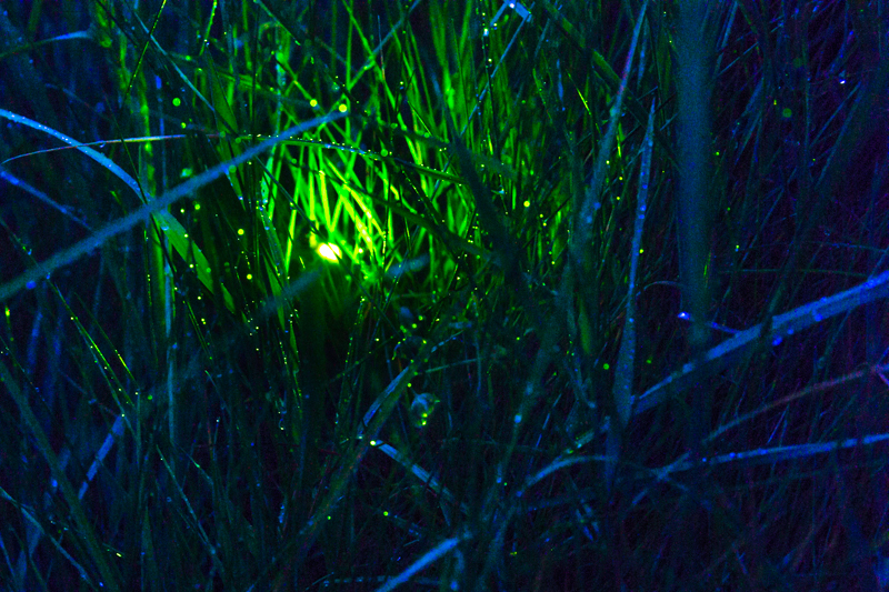 Glow worm long exposure, Bridges - Wide-angle Wildlife