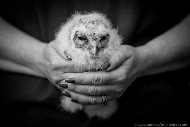 Cuan Wildlife Rescue Tawny Owl - UK Owls