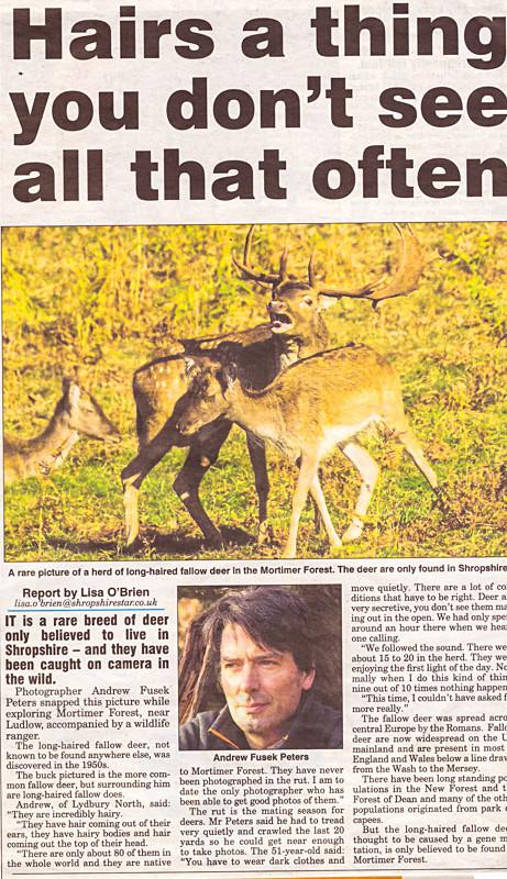 long haired fallow Shropshire Star - Media & Awards