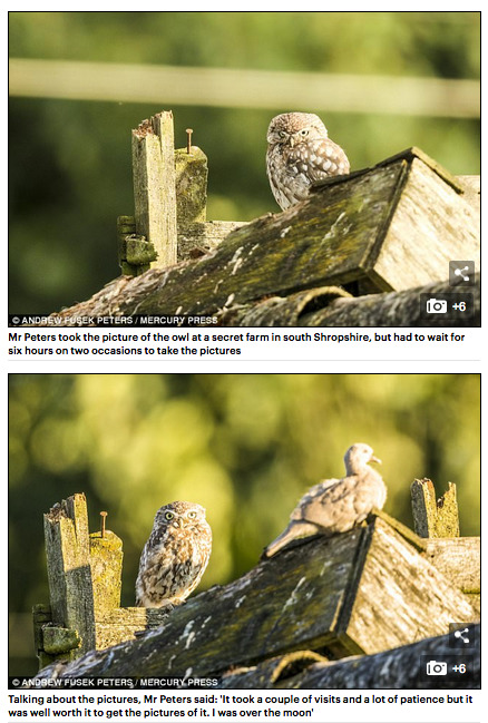 Mail Online Little Owl Feature 3 - Media & Awards