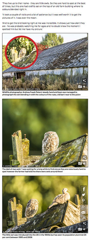 Mail Online Little Owl Feature 2 - Media & Awards