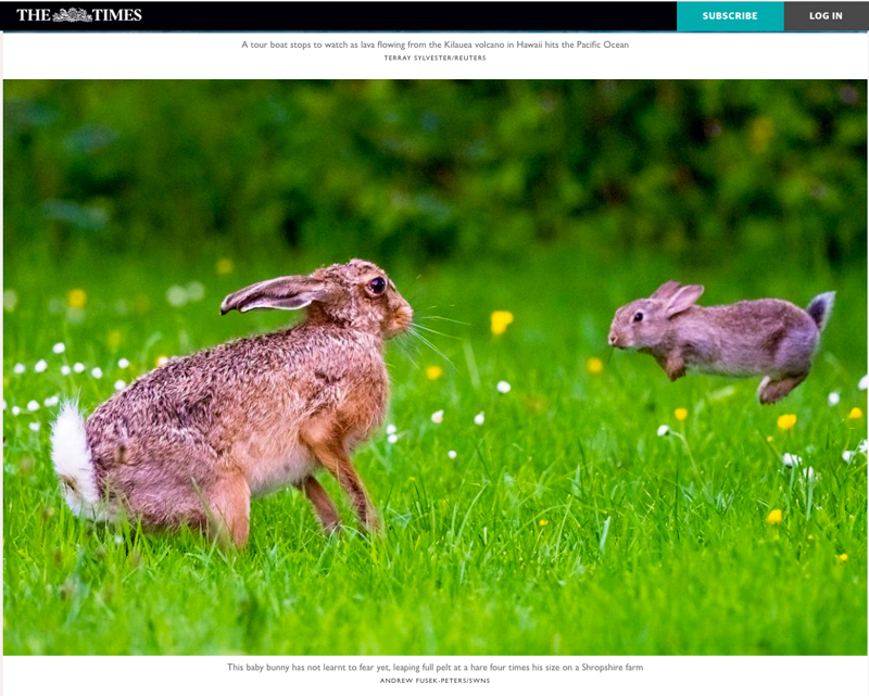 Screen Shot 2018-06-06 at 121943 - Olympus Wildlife