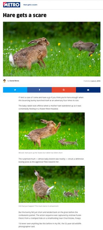 Screen Shot 2018-06-06 at 122040 - Olympus Wildlife