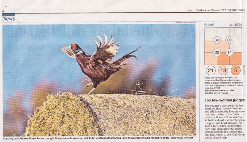 Dancing Pheasant, The Times - Media & Awards