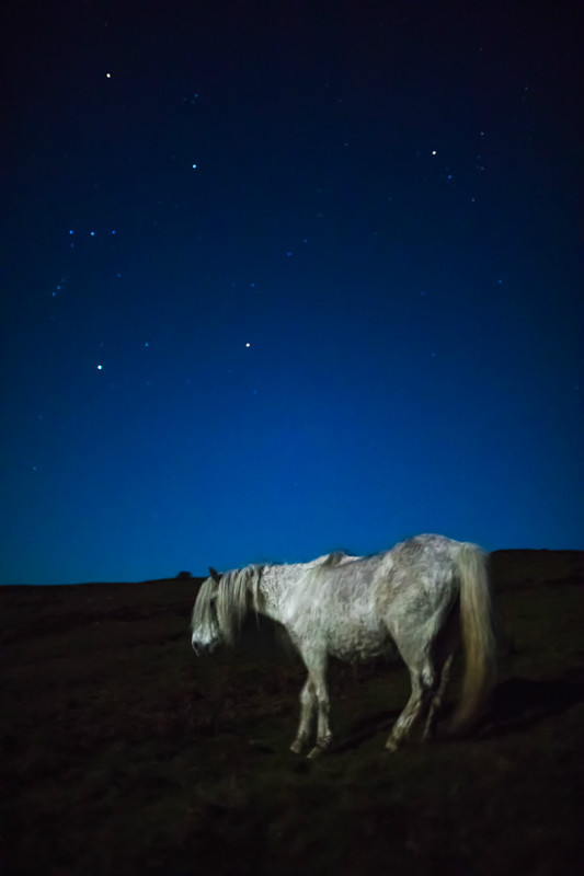 White horse on the Mynd under full moon Sigma 35mm 1.4 - Sigma