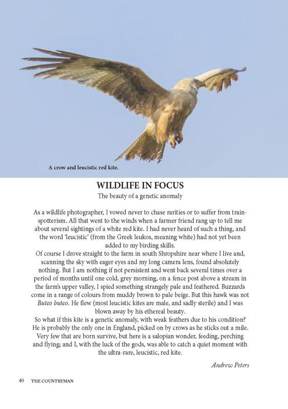 The Countryman Wildlife in Focus Leucistic Red Kite_Page_1 - Media & Awards