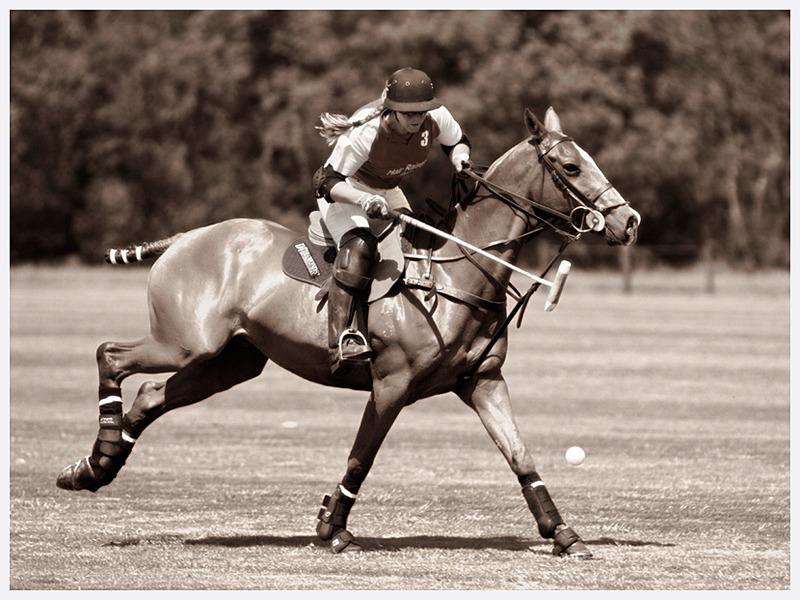 Polo Photography | Sussex Cheshire England | Rachael Edwards