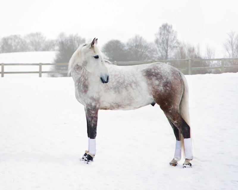 Horse Portrait Photography | East & West Sussex | Rachael Edwards