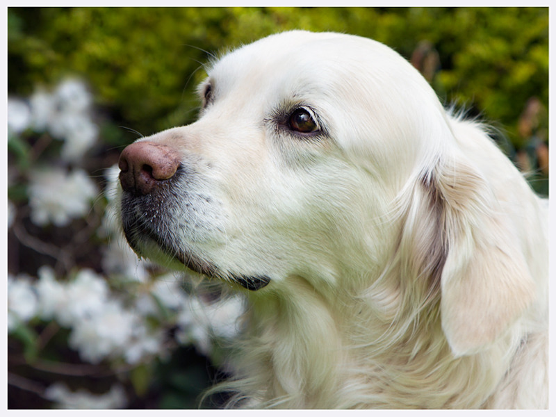Stunning Canine Photography | East & West Sussex | Rachael Edwards