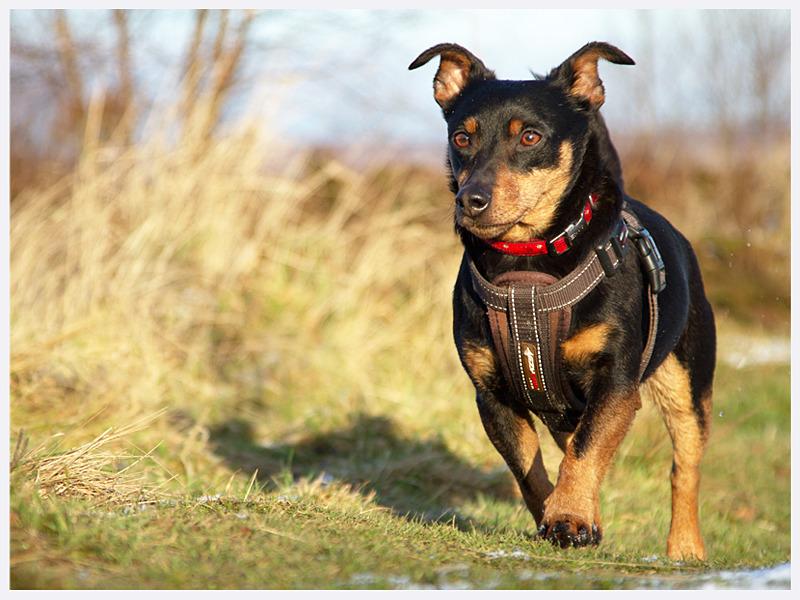 Stunning Canine Photography | Southern England | Rachael Edwards