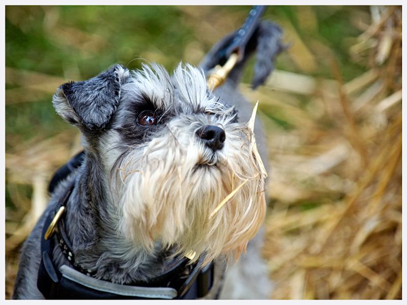 Pet Photography | East & West Sussex | Rachael Edwards