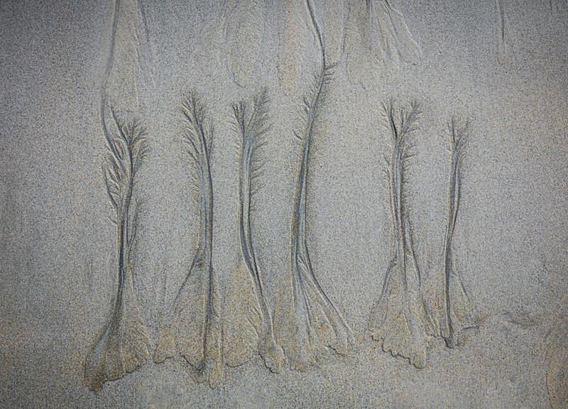 Sand forest 2 - Chalk/Sand