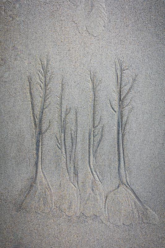 Sand forest 1 - Chalk/Sand