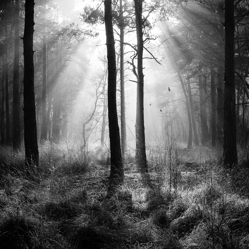 In the forest - Black and White