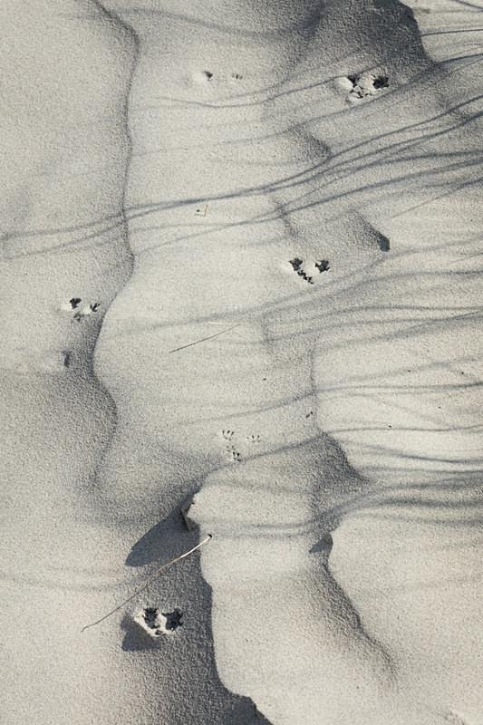Sand prints - Chalk/Sand