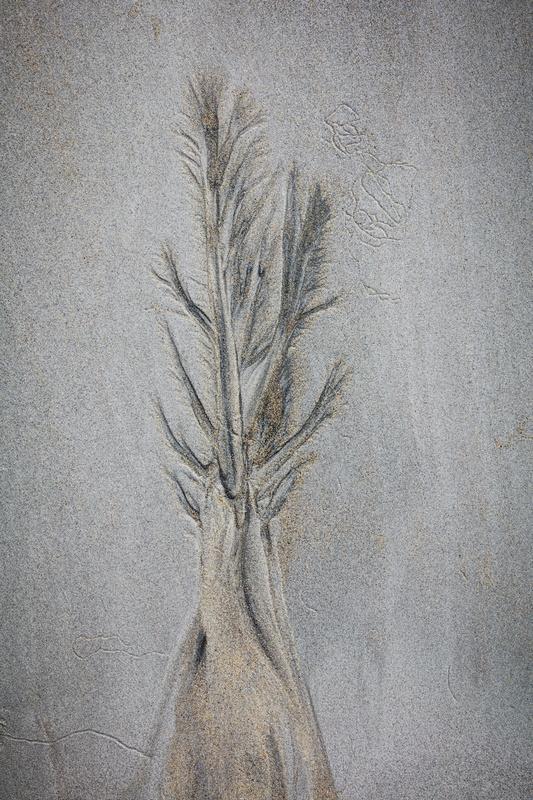 Sand tree 3 - Chalk/Sand
