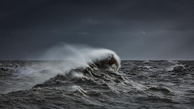 Selkie - Ocean